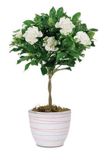 Растение для дома в Караганде